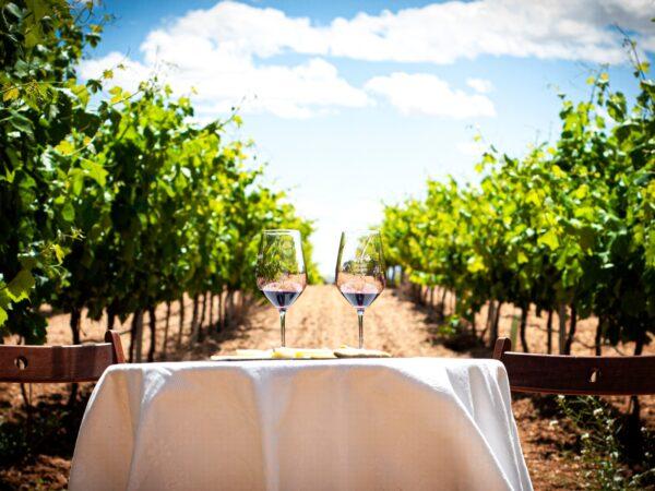 El Vino Ecológico Y Sus Beneficios